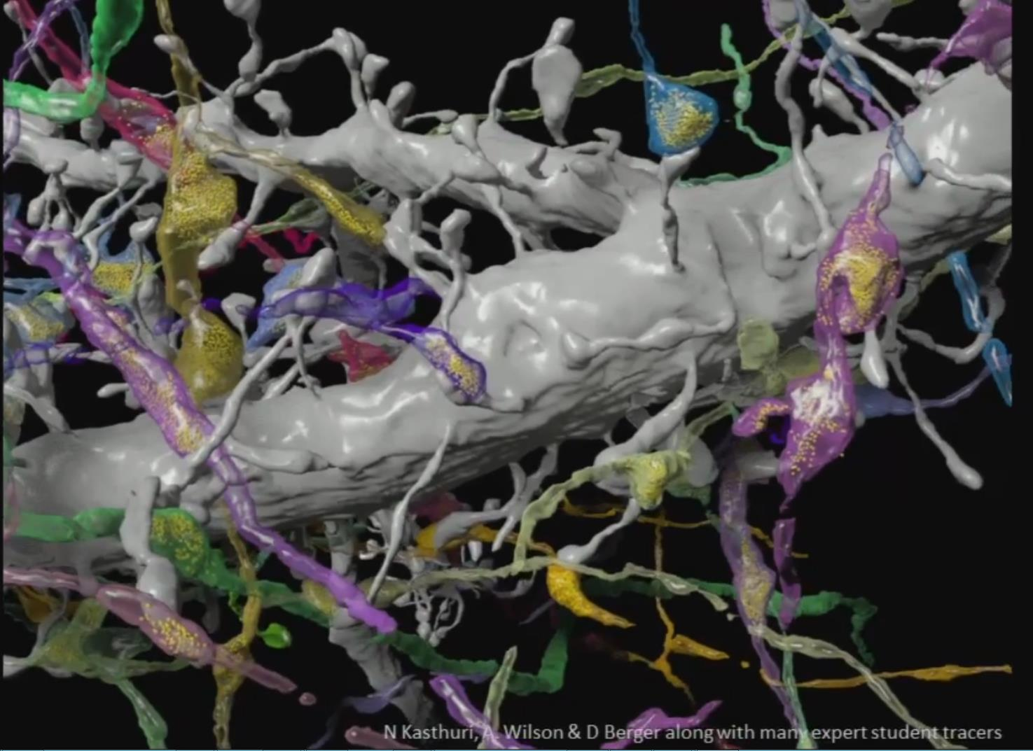 Connectomics: Mapping the Brain (Jeff Lichtman)<br> Professor of Molecular and Cellular Biology